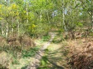 Un chemin de randonnée